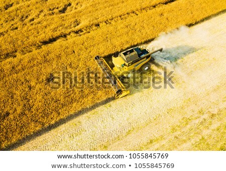 Aerial view on the combine working on the large field Stock photo © artjazz