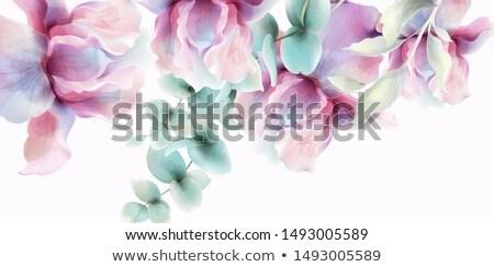 átlátszó virágok vektor vízfesték rusztikus poszter Stock fotó © frimufilms