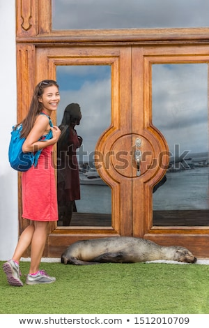 Galapagos tourist funny image with sea lion blocking door to hotel resort Stock photo © Maridav