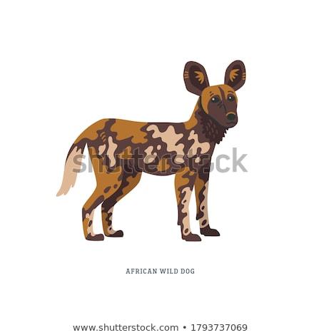 Desenho animado africano cão em pé safári Foto stock © tigatelu
