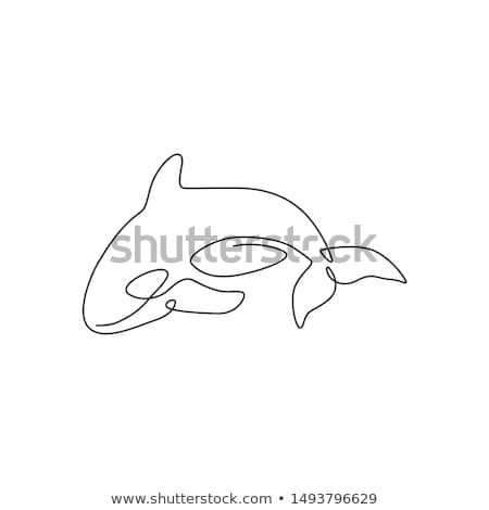 One orca whale on white background Stock photo © bluering