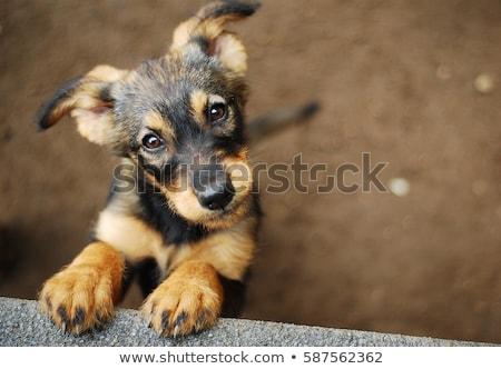 Hajléktalan kutyakölyök lyuk fű utca Föld Stock fotó © joyr