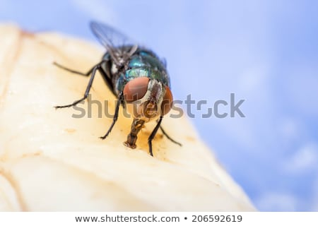 house fly in extreme close up sitting on leaf stock photo © gewoldi