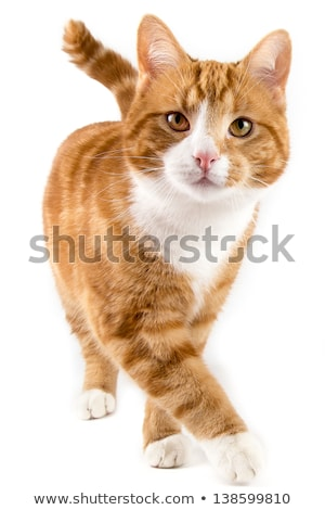 Foto stock: Retrato · vermelho · gato · cara · natureza