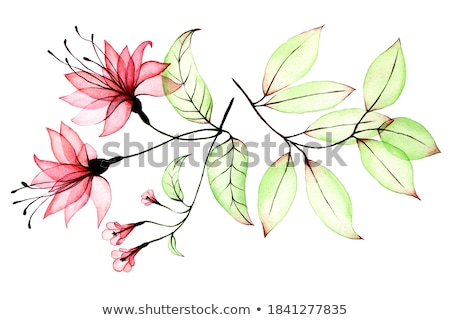 Red flower with green leaf Stock photo © boroda