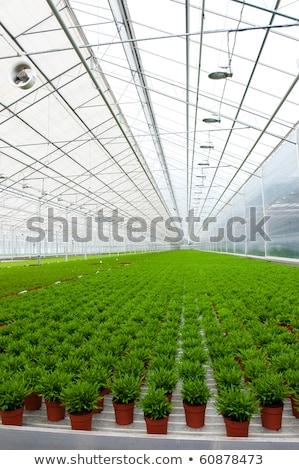 Szklarnia wiele bambusa roślin wnętrza Zdjęcia stock © ivonnewierink