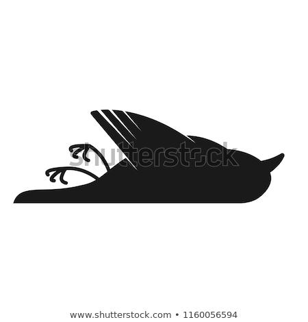 ストックフォト: 死んだ · 鳥 · 小さな · 舗装 · 自然 · 通り