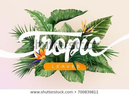ярко · тропический · пляж · дерево · зеленый · синий · облачный - Сток-фото © kaycee