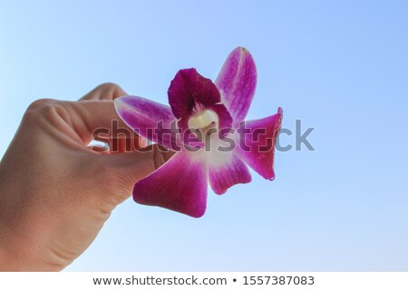 Beautiful tranquil pretty girl - orchid flower in her hands Stock photo © gromovataya
