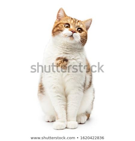 Macska arc elöl felfelé lefelé vektor Stock fotó © Luppload