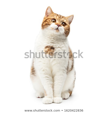 кошки лице вверх вниз вектора Сток-фото © Luppload