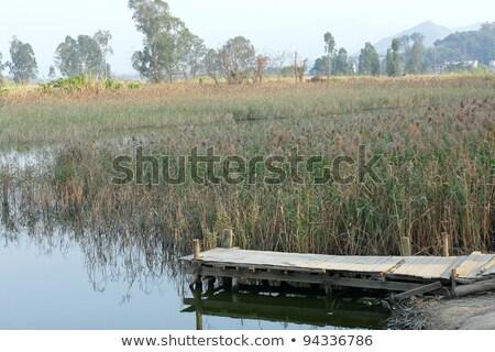 Dock At A Quiet Pond Foto d'archivio © cozyta
