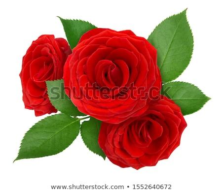 három · vörös · rózsák · elnyűtt - stock fotó © KMWPhotography