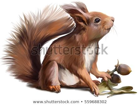 Squirrel Painter Stock photo © derocz