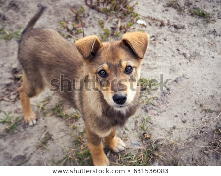portrait of a stray dog in street stock photo © ryhor