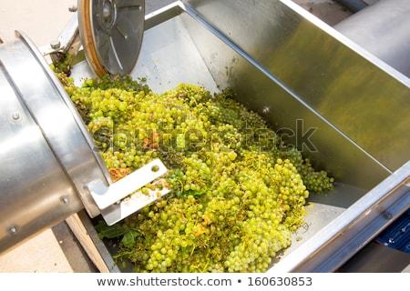 corkscrew crusher destemmer winemaking with grapes stock photo © lunamarina