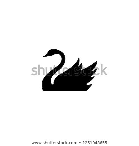 Fekete hattyú ikon illusztráció izolált fehér Stock fotó © cidepix