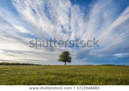 elma · ağacı · siluet · beyaz · düzenlenebilir · gökyüzü · doğa - stok fotoğraf © adamson