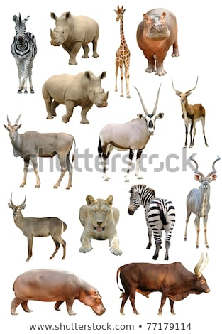 Stock photo: antelope collection isolated on white background
