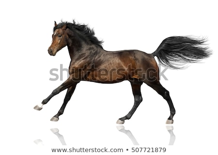 Horse tail  Stock photo © smuki