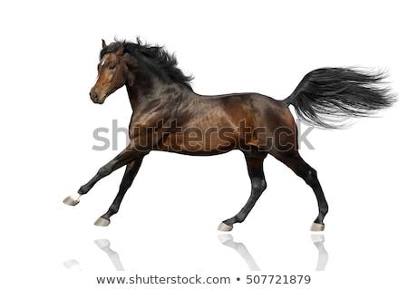 horse tail stock photo © smuki