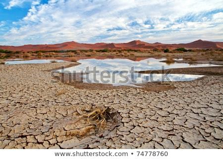 kuru · nehir · Namibya · yatak · kanyon · çöl - stok fotoğraf © imagex