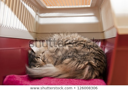 gato · dormir · jaula · stock · foto · cuadro - foto stock © punsayaporn