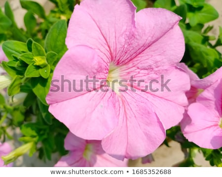 Rosa jardim verde crescer flor Foto stock © kimmit