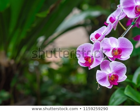 ピンク 蘭 緑 細部 花 ストックフォト © jeancliclac