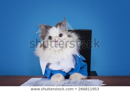kitten sitting on a chair stock photo © tobkatrina