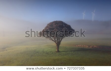Foggy winter rural landscape and Carcoar Blayney Wind Farm Stock photo © lovleah