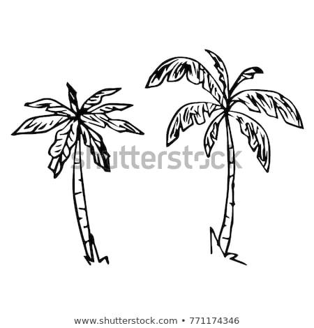 ilha · palmeiras · rabisco · ícone - foto stock © netkov1