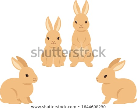 Lapin blanche portrait animaux studio Photo stock © fanfo