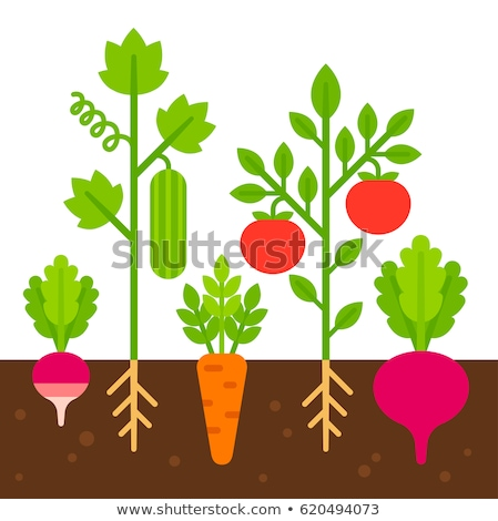 vector simple vegetable set stock photo © galyna