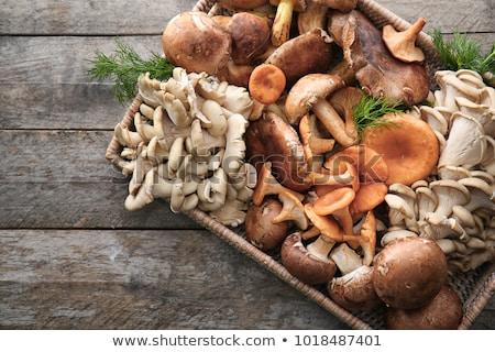 Nyers osztriga gombák nagy halom izolált Stock fotó © zhekos