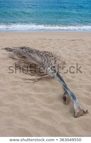 Palm · sable · plage · français · ville · soleil - photo stock © capturelight