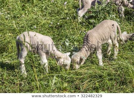Sereg birka zöld testtartás organikus megnőtt Stock fotó © meinzahn