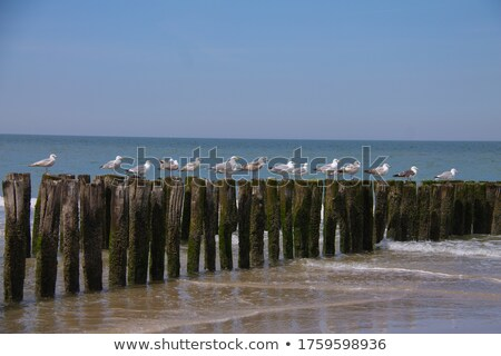 seagull at the coast sitting on wave  breakers Stock photo © meinzahn