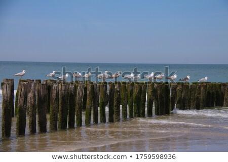 Gabbiano costa seduta onda legno mar baltico Foto d'archivio © meinzahn