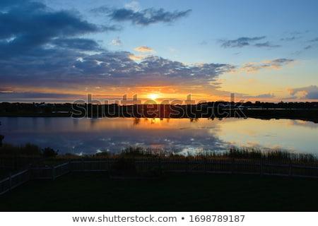 fa · sziluett · gyönyörű · vibráló · naplemente · felhők - stock fotó © alisluch