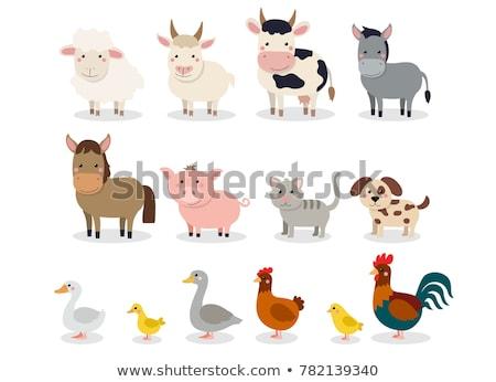 çiftlik hayvanları birlikte gıda inek alan tavuk Stok fotoğraf © bluering