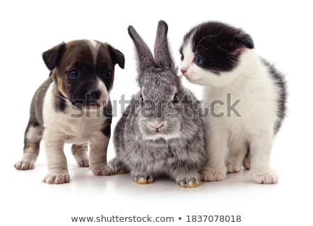 Stock photo: group of funny dogs waching in studio