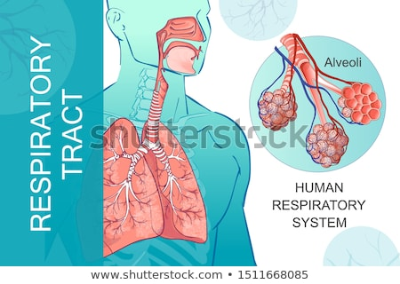Alveoli a part of the respiratory system. Lung silhouette at the Stock photo © Tefi