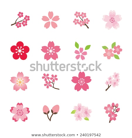 Cherry blossoms icons set Stock photo © yo-yo-