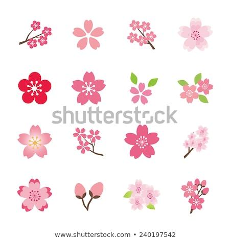 cseresznyevirágzás · ikon · szett · illusztráció · vektor · virág · tavasz - stock fotó © yo-yo-