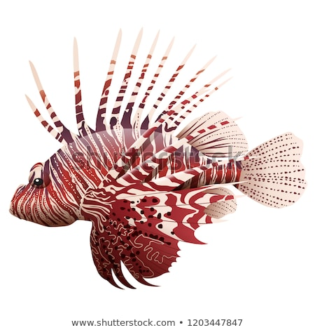 Doodle character for lionfish Stock photo © bluering