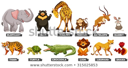 Many types of wild animals Stock photo © bluering