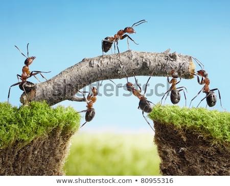 Hangya égbolt rovarok nyár természet ikon Stock fotó © Olena