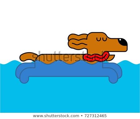 Köpek yüzme yalıtılmış ev evcil hayvan su Stok fotoğraf © MaryValery