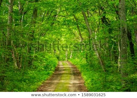 vegyes · erdő · tavasz · tűlevelű · lombhullató · fák - stock fotó © Mps197